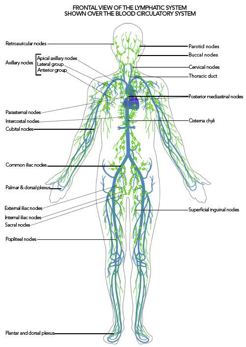 Lymphatic system over blood system